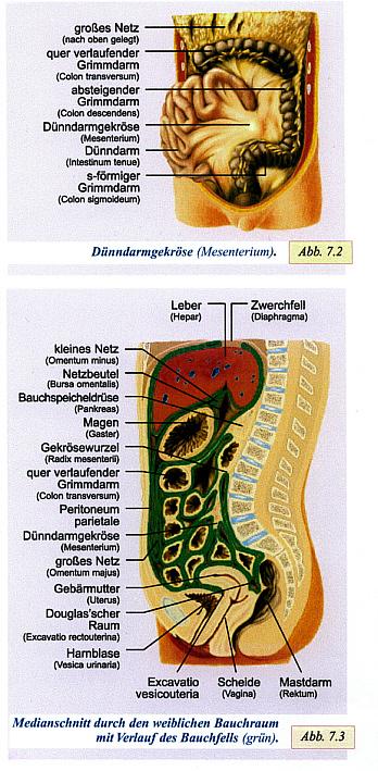 Fachbegriffe Ovarialkarzinom 1