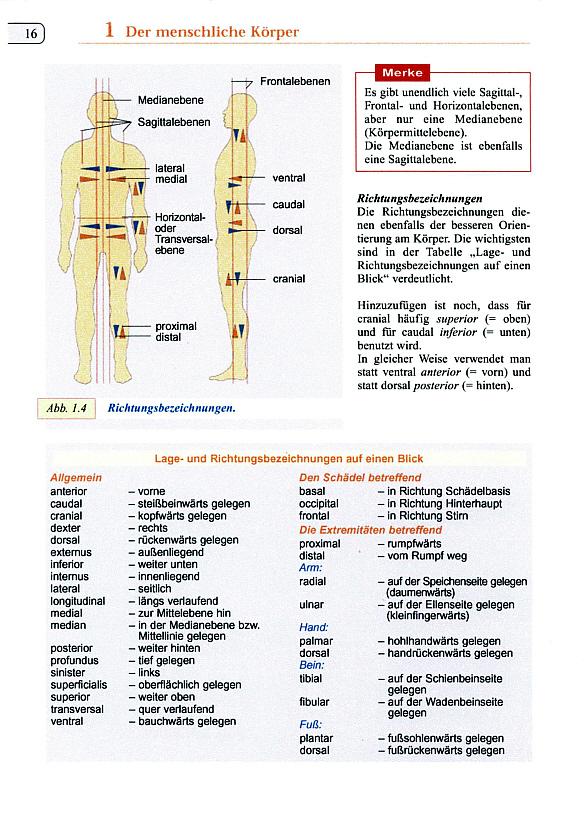Fachbegriffe Ovarialkarzinom / Eierstockkrebs